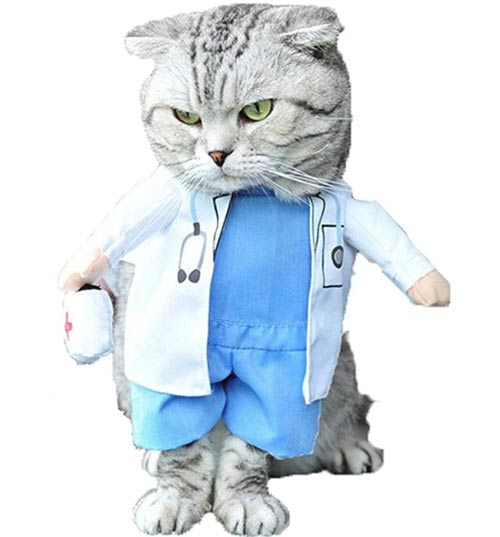 Halloween Costumes for Cats? Count me in! , Mommyhood101