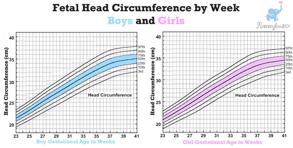 fetal head circumference chart pregnancy weeks
